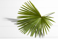Palm leaf on white background Stock Photography