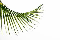 Palm leaf on white background Stock Photo