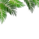 Palm Leaf on White Background with Place for Your Text Vector Il Stock Photography