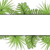 Palm Leaf on a white background Vector Illustration EPS 10. Palm Leaf on a white background Vector Illustration EPS 10 vector illustration