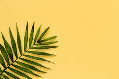 Palm leaf on a yellow background. Top view stock photo
