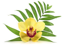 Palm leaf and yellow orchid. Isolated over white Stock Images