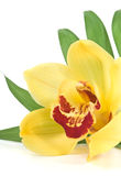 Palm leaf and yellow orchid Stock Photos