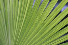 Palm leaf in zoo in germany stock photo