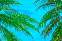 palm leafs against turquoise ocean background Royalty Free Stock Images