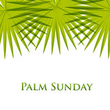 Palm leafs  background. Vector illustration  for the Christian holiday Palm Sunday. Royalty Free Stock Photography