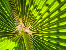 Palm leafs Stock Images