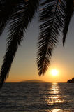 Palm leafs and sea in the evening, sunset Stock Image