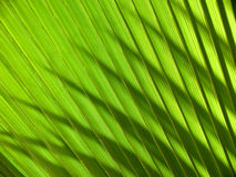 Palm leave Royalty Free Stock Photography