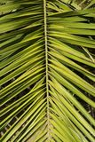 Palm Leave stock photography