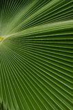 Palm leave, Caribbean Royalty Free Stock Photography