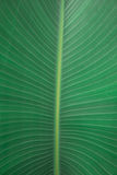 Palm leave detail texture. Textured palm leaf, ideal for backgrounds and textures Stock Photo