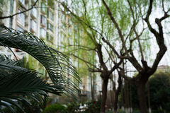 The palm leave in garden - blurred building background. Palm leave in garden - blurred building background Stock Images