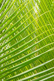 Palm Leave green line composition Stock Photography