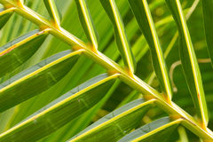 Palm Leave green line composition Royalty Free Stock Photography