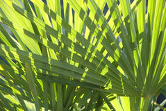 Free Palm Leaves Stock Image - 13904001