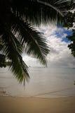 Palm leaves. Anse Lazio beach, Praslin, Seychelles Royalty Free Stock Image