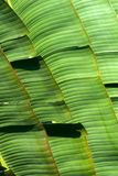Palm leaves. Pattern branching out royalty free stock photo