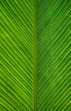 Palm leaves. Detail of overlapping palm leaves Royalty Free Stock Photo