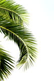 Palm leaves Stock Image