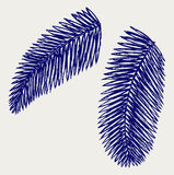 Palm leaves Royalty Free Stock Images