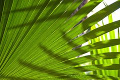 Palm leaves. In a sunny day royalty free stock photo