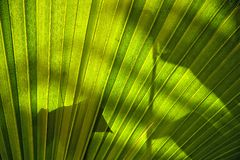 Palm leaves. In a sunny day stock photo