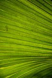 Palm leaves. In a sunny day stock photography