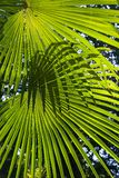 Palm leaves. In a sunny day royalty free stock photography