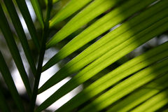 Palm leaves. Sunlight on palm leaves royalty free stock photography