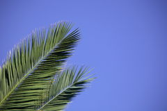 Free Palm Leaves Stock Photo - 956670