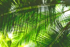 Palm Leaves - Abstract Green Natural Background with Blur Royalty Free Stock Image