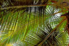 Palm Leaves - Abstract Illustration Background stock photo