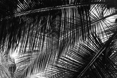 Palm Leaves - Abstract Natural Background in Grey Scale stock photo