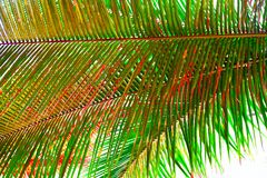 Free Palm Leaves - Abstract Natural Green Background With Tinge Of Red Royalty Free Stock Images - 93011499