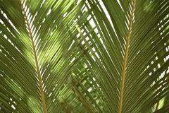 Palm leaves abstract Royalty Free Stock Photography