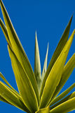 Palm leaves against a blue sky Stock Image