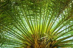 Palm leaves against blue sky Stock Image