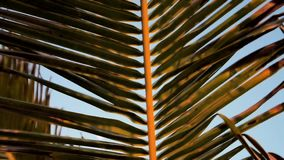 Palm leaves against the blue sky. Close up. Slow motion stock footage
