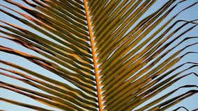 Palm leaves against the blue sky. Close up. Slow motion stock video