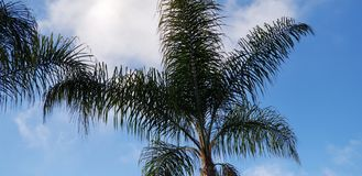 Palm Leaves Against Blue Sky with White Clouds royalty free stock photography