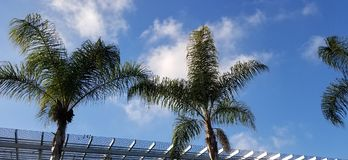 Palm Leaves Against Blue Sky with White Clouds stock image