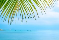 Palm leaves against the sea royalty free stock image