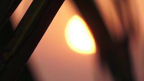 Palm leaves against the setting sun. Maldives video blurring. Horizontal stock footage