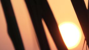 Palm leaves against the setting sun. Maldives video. Horizontal stock video footage