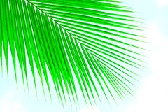 Palm leaves against sky Stock Image