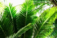 Palm leaves. Against white sky Stock Image