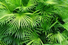 Free Palm Leaves Background Stock Image - 15207621