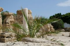 The palm leaves on the background of ancient ruins. In Carthage Stock Photos
