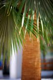 Palm leaves on a background of the barrel Stock Images